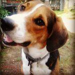 Brutus' Blog - Brutus Says Hello!