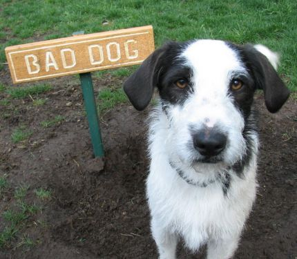 A Dog's Eye View: You Ate What???