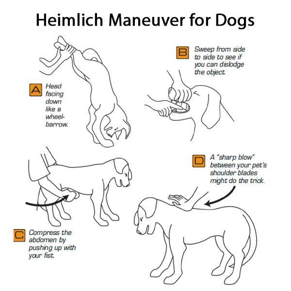 Dog Heimlich