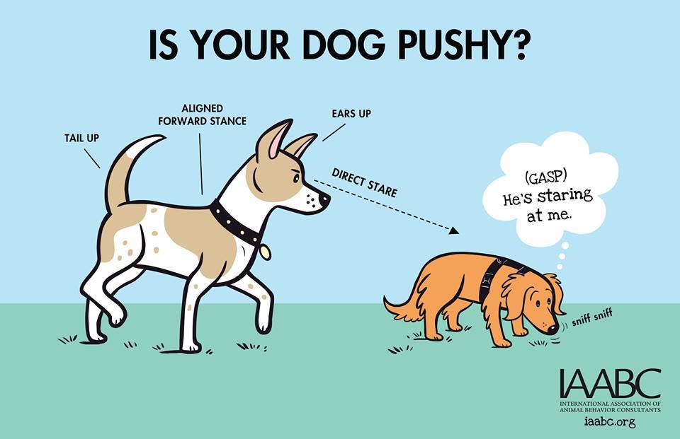 Is Your Dog Pushy?
