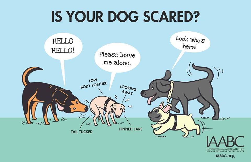 Is Your Dog Scared?