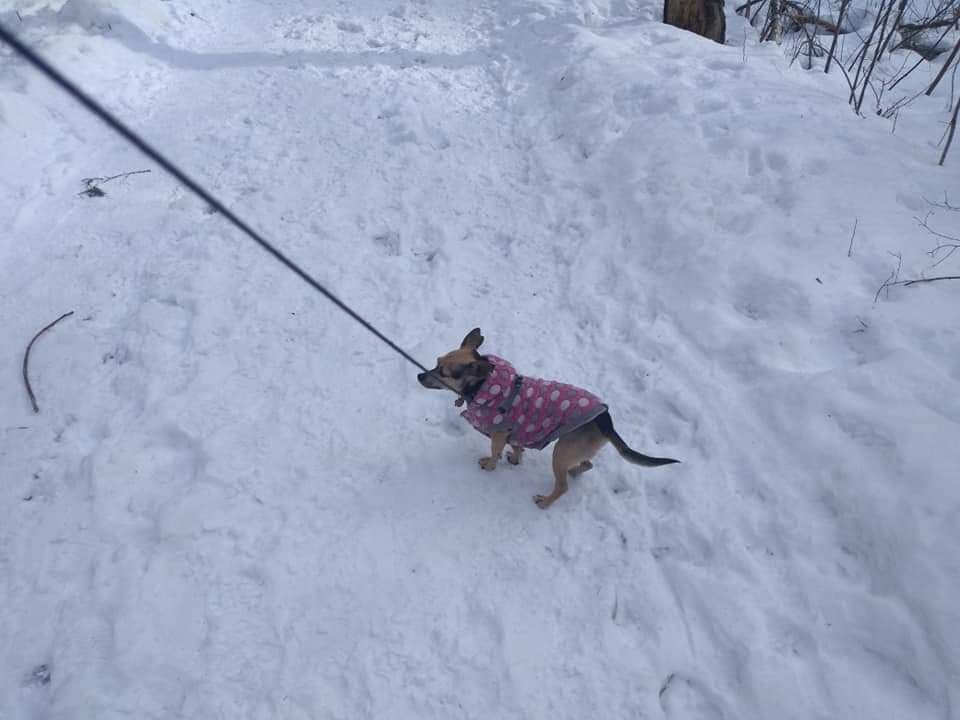 Kathy's Tips for Hiking with Dogs in the Winter