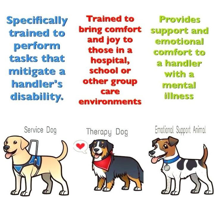 What is the difference between service dogs, therapy dogs, and emotional support dogs?