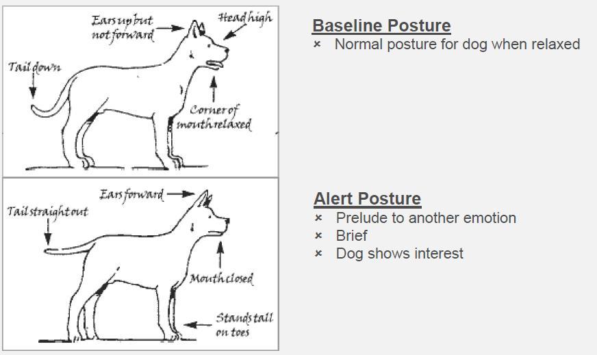 Body Language – Chelmsford Dog Association