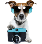 Doggie Photo Shoot