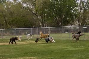 dogsrunning