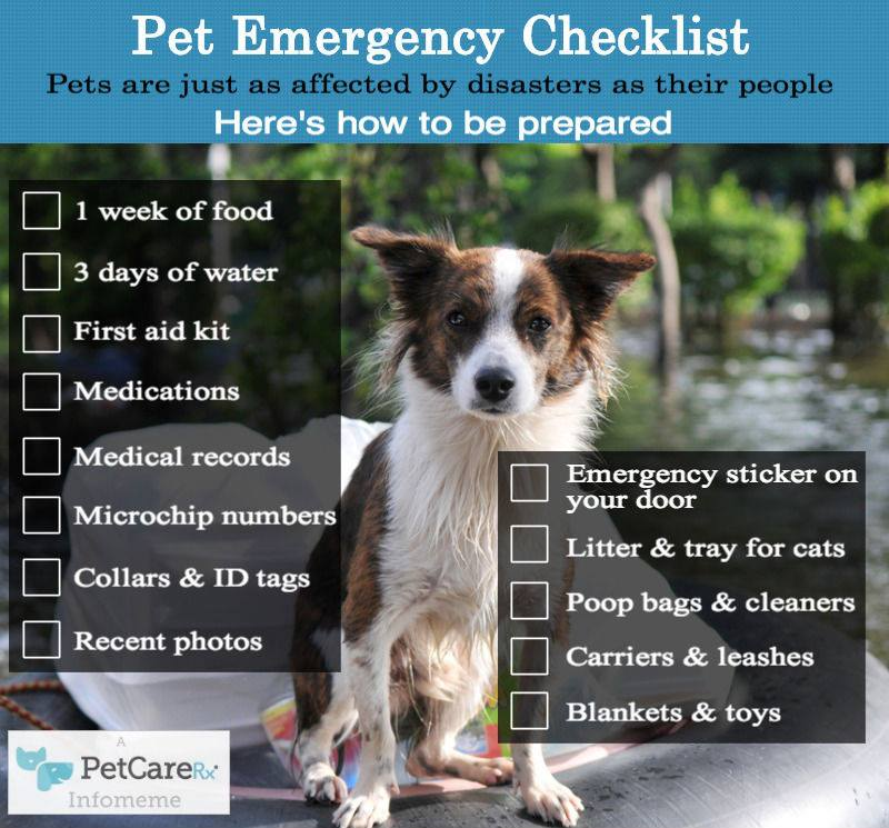 Pet Emergency Checklist