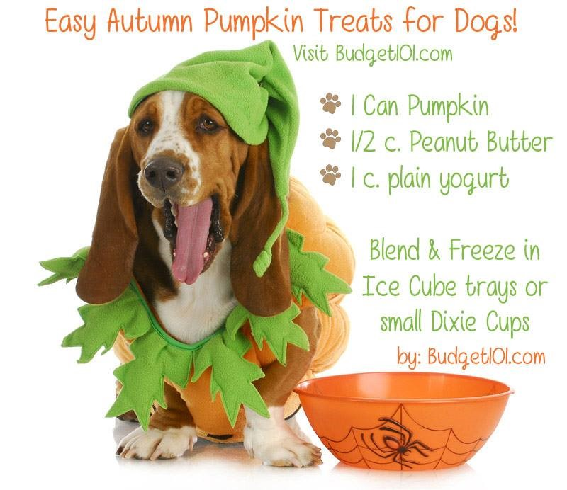 pumpkin-treat-recipe