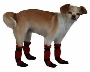 Top Ten Reasons Buying Socks for Your Dog May Not Be A Wise Investment
